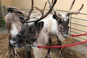 Santa's Grotto With Real Reindeers @ Made-Well | Hatherleigh | England | United Kingdom